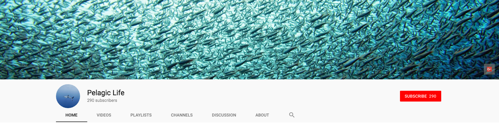 YouTube banner for Pelagic Life channel.